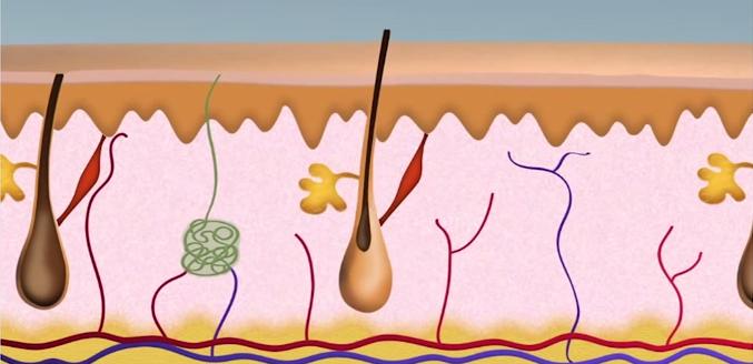 Công nghệ triệt lông tốt có những tiêu chuẩn gì? 3