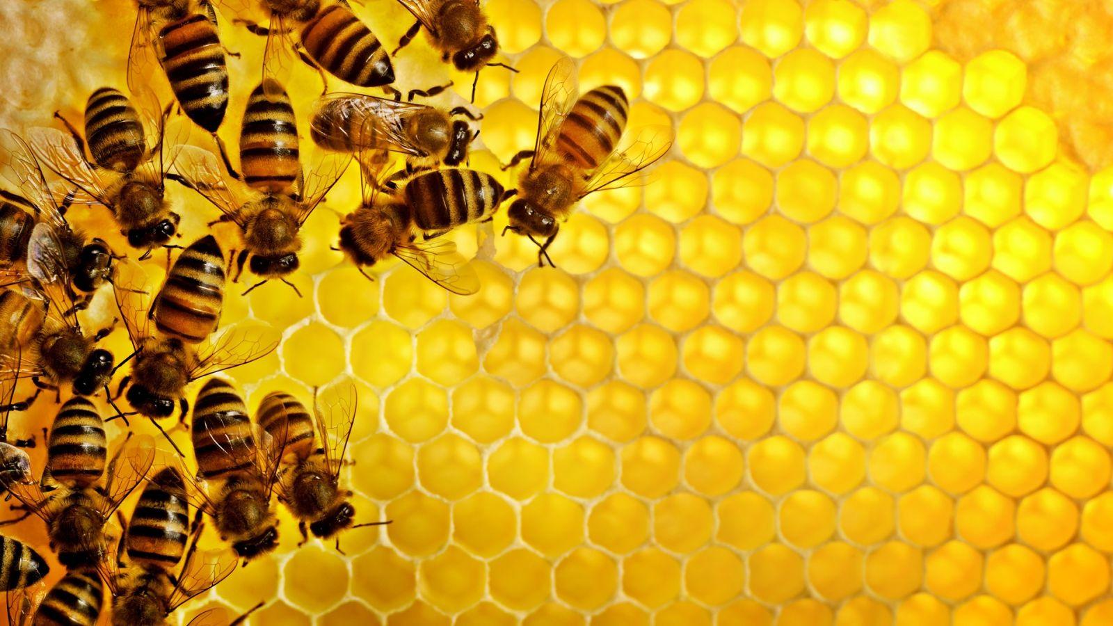 Sáp ong, phương pháp làm mờ lông chân tay đơn giản, dễ làm