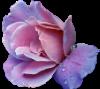 lavender_rose_by_sarthan-d5sxgzk