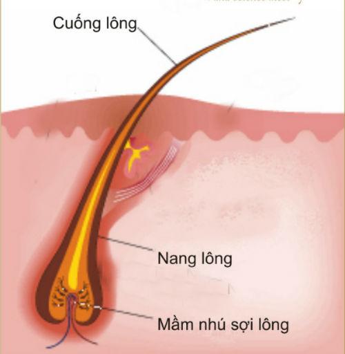 cach-tay-long-tu-nhien-khong-moc-lai 2