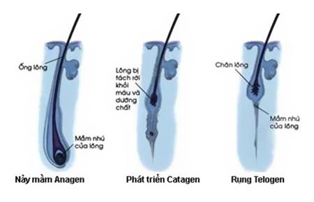 triet-long-mot-lan-co-het-vinh-vien-khong-16